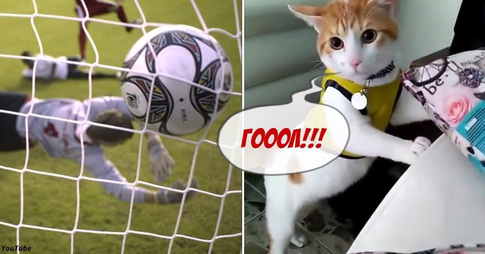 Кот так часто смотрел футбол с хозяином, что тоже теперь кричит «Гол!» Это вам не волк забивака!