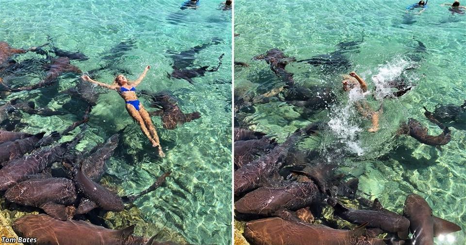 Модель хотела фото в Instagram с акулами. Смотрите, что получилось Поплавала, называется.