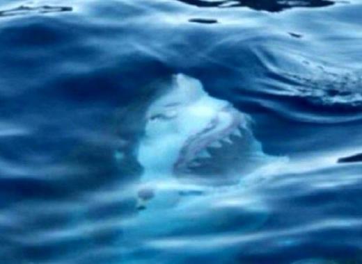 14 фото, которые навсегда отбивают желание купаться на пляжах для ″дикарей″ В тропиках обходить стороной надо даже лужи!