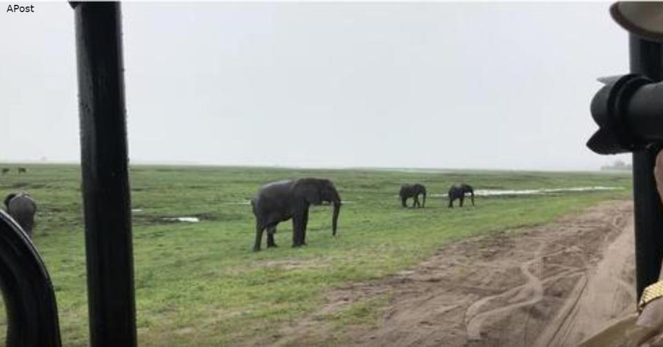 Вы когда нибудь видели, как рождаются слоны? Вот видео Туристы сняли что то невероятное.