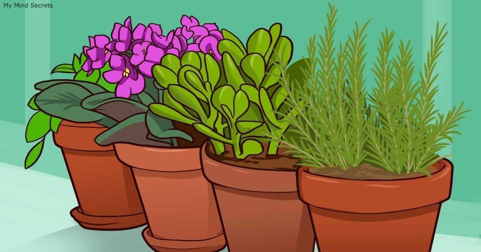 10 опасных растений, которые лучше вообще никогда не держать дома Многие и вовсе приводят к смерти!