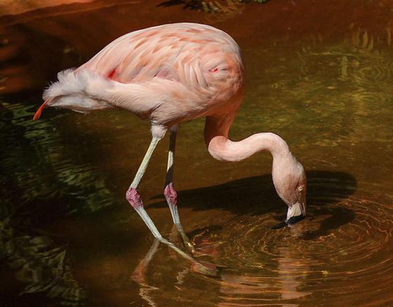 Я работаю в зоопарке. Вот 16 самых клевых фактов о животных, которые я узнала на работе Действительно любопытно.