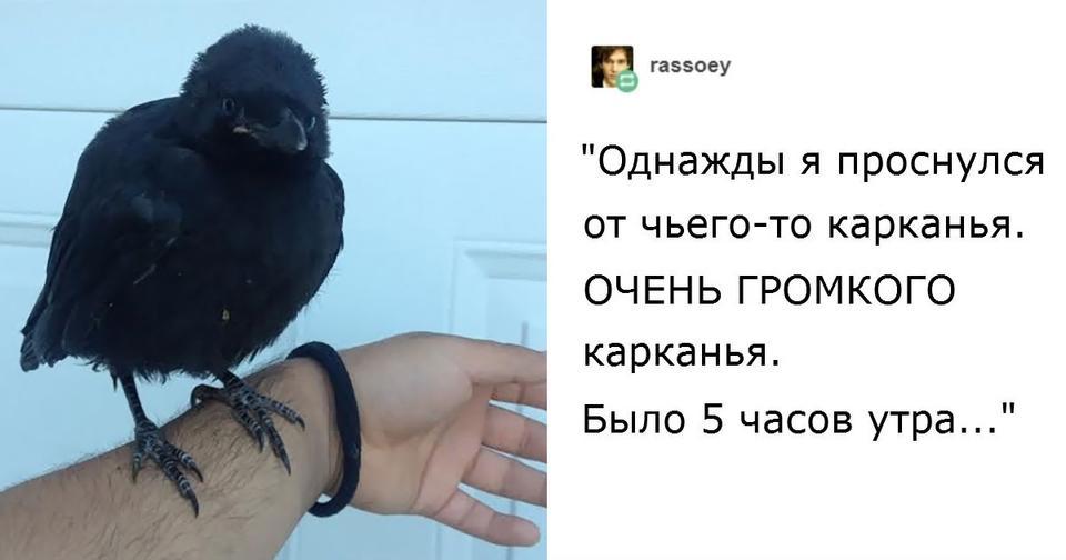 Вот реальные истории, которые доказывают: вороны   самые умные существа на Земле! Они умнее некоторых людей.