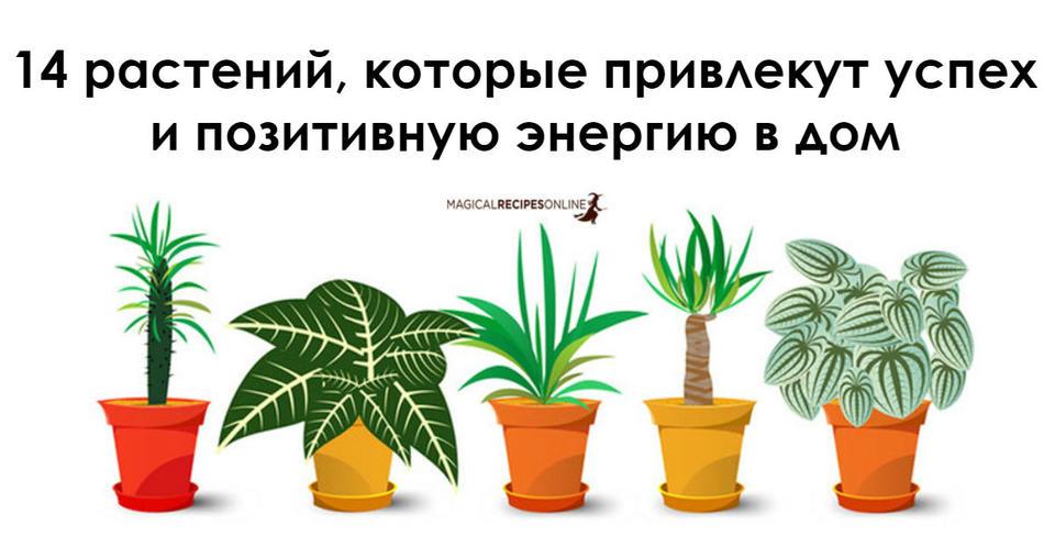 14 растений, которые лучше всех привлекают в дом положительную энергию Они должны быть у всех.
