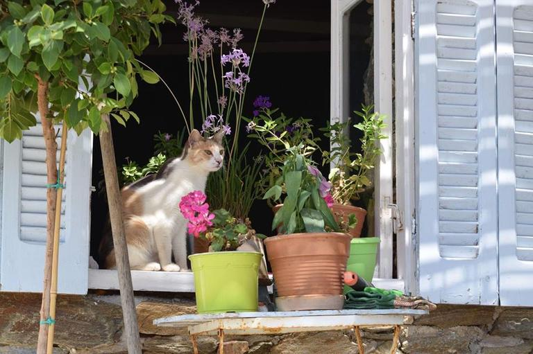 Греции нужен работник, чтобы ухаживать за 55 кошками на острове. Старт - с ноября Вот условия работы.