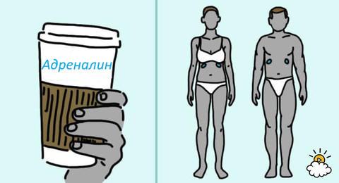 Вот что могут сделать с вашим телом 3 чашки кофе в день 10 важных последствий.