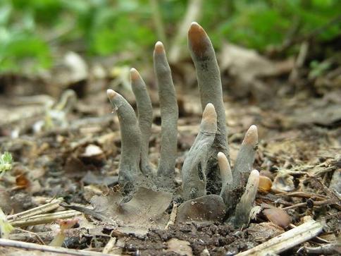33 раза, когда кто-то увидел настоящую ″живую″ природу - и теперь не может придти в себя Жуть!