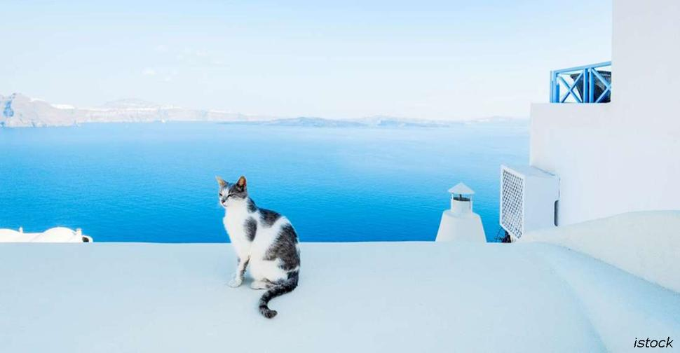 Греции нужен работник, чтобы ухаживать за 55 кошками на острове. Старт   с ноября Вот условия работы.