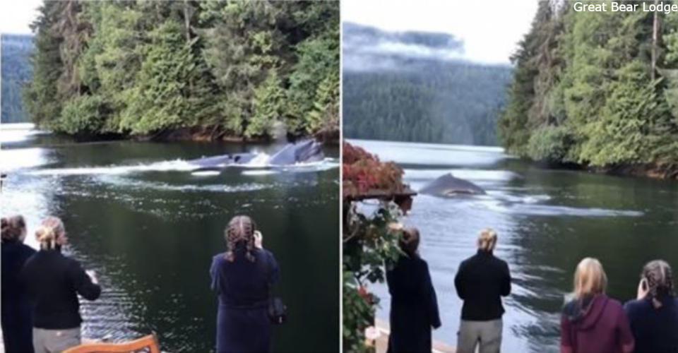 Горбатые киты приплыли к нему домой   и устроили потрясающее шоу! Вы только посмотрите это видео...