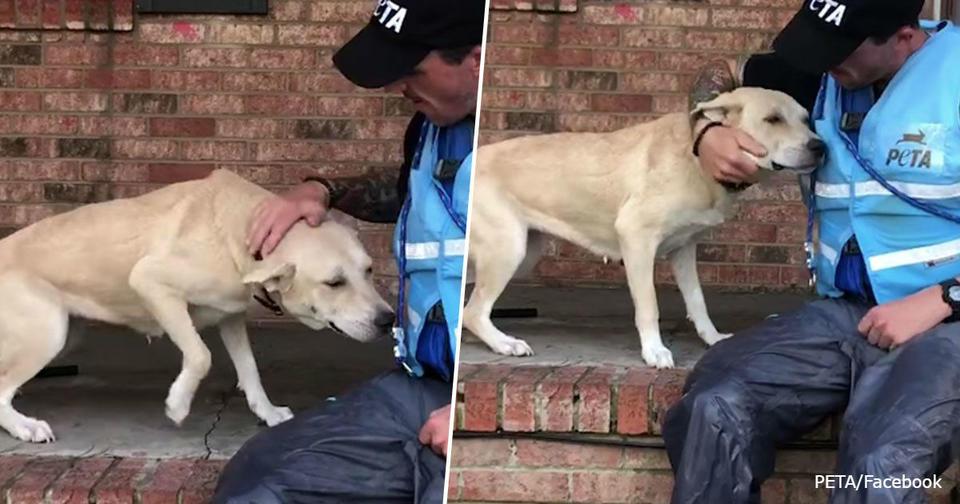 Испуганная собака счастлива увидеть спасателей: хозяева бросили ее во время урагана Трогательная история.
