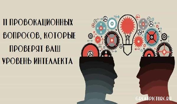 11 провокационных вопросов, которые проверят ваш уровень интеллекта