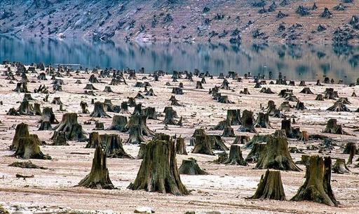 Китайцы открыто пишут в интернете: ″Сибирь - наша″, а ″русские - еще пожалеют″ Тихий захват российских лесов.