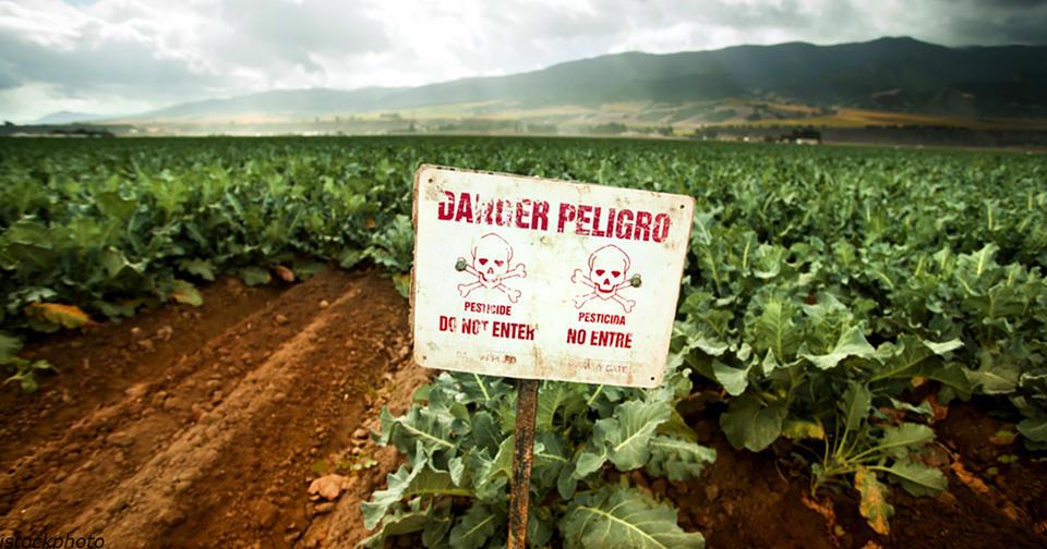Вот почему этот вызывающий рак гербицид распыляют на растения прямо перед сбором урожая И это попадает к нам на стол...