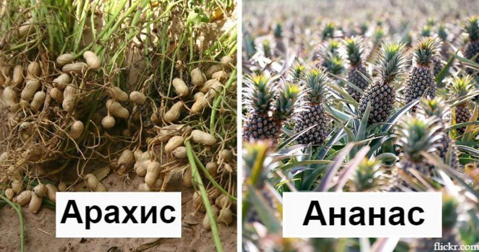 30 фоток о том, как на самом деле растет ваша еда Осень уже здесь.
