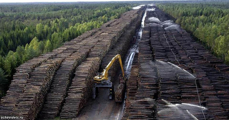 Китайцы открыто пишут в интернете: ″Сибирь   наша″, а ″русские   еще пожалеют″ Тихий захват российских лесов.