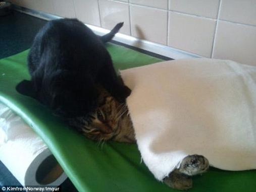 В приюте спасли умирающего кота - а он сам оказался супергероем Ну ничего себе!