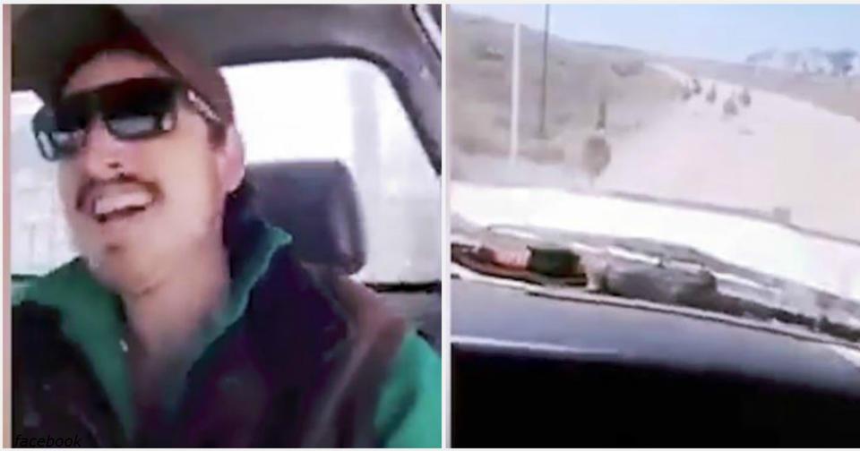 Мудак на джипе снял на видео, как он давит страусов на грунтовке в глубинке Он раздавил 10 птиц!