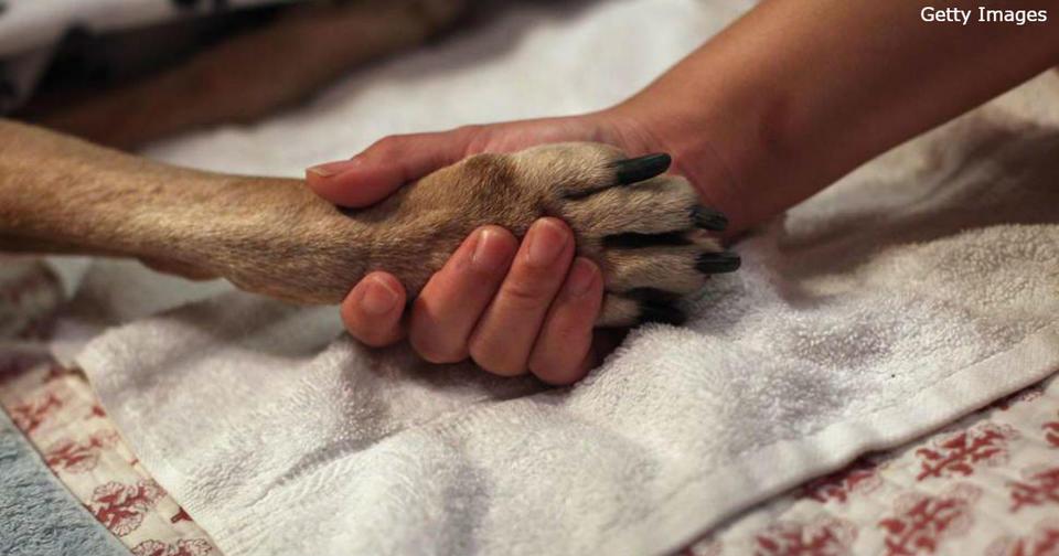 Злой ветеринар показал, почему нельзя бросать животных в одиночестве у врача Не делайте так.