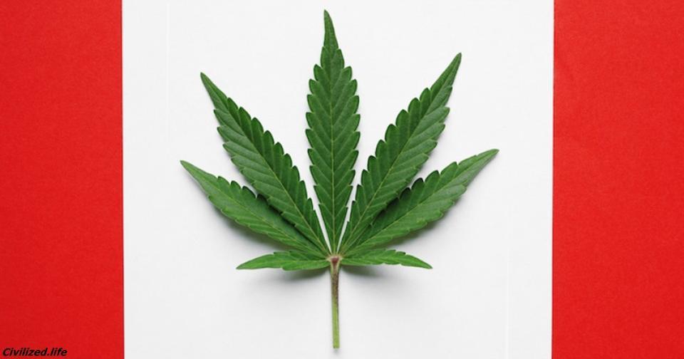 С сегодняшнего дня марихуана в Канаде абсолютно легальна Носить при себе можно до 30 г.