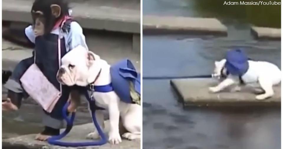 Смотрите, как собака и обезьяна форсируют реку! Это очень смешно Только посмотрите на это.