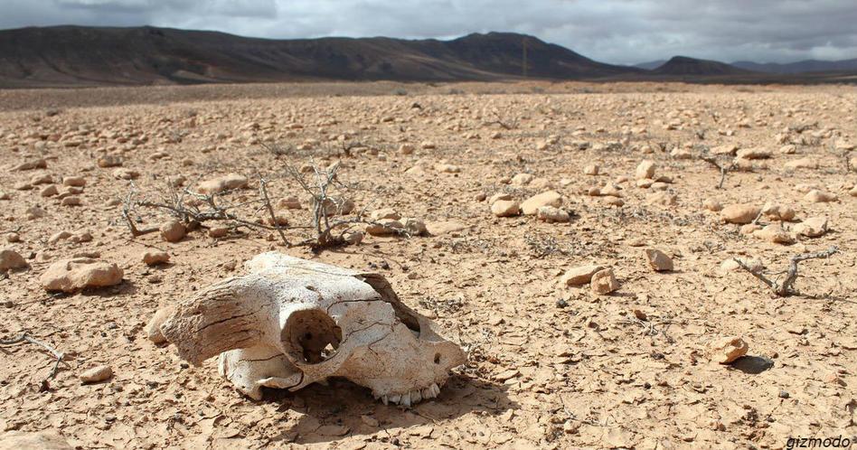 С 1970 года люди уничтожили 60% всех животных! И этот процесс продолжается!