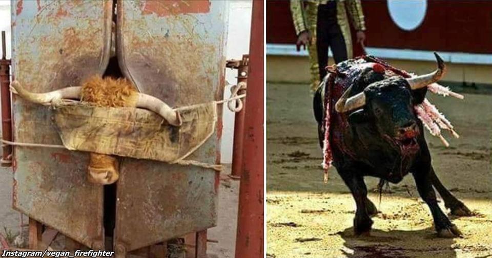 11 причин, почему бег с быками - это поистине варварское европейское развлечение Не потакайте таким жестоким ″традициям″.