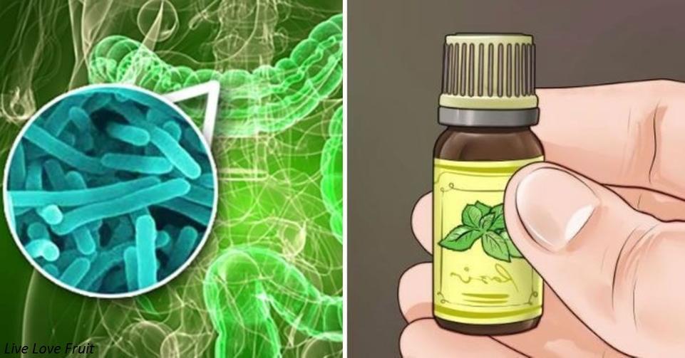 Эфирные масла – новые антибиотики против неуязвимых ″супербактерий″ За ними   будущее.