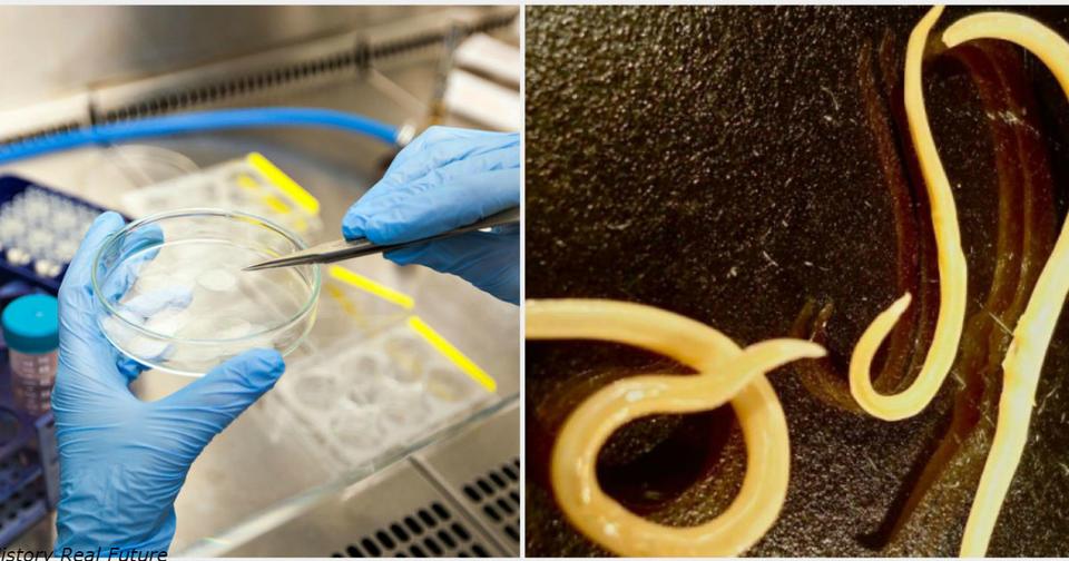 Страшные сибирские черви, погребенные в вечной мерзлоте на 42 000 лет, возвращаются к жизни Черт его знает, насколько они опасны.