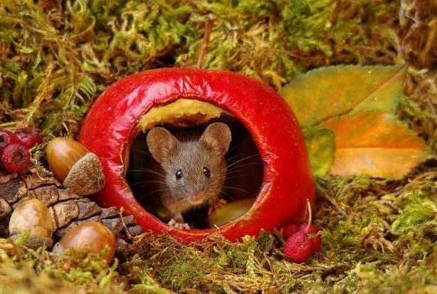 Мужик нашел в саду семью мышей. И построил им ″деревню″! Фотосессия тоже удалась!