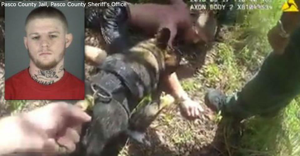 Маньяк пытался украсть ребенка   но его спасла полицейская собака! Вот как всё было Предупреждение: кадры могут быть неприятными для некоторых зрителей.
