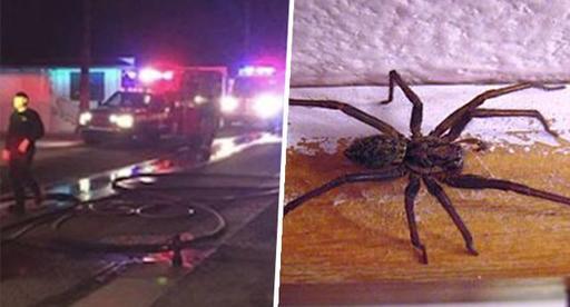 Мужик пытался убить паука - и сжег собственный дом Это как из пушки по воробьям!