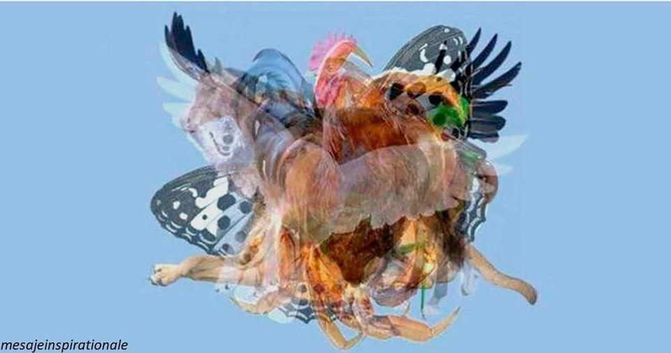 Какое животное ваш мозг увидел первым? Вот как это отражает вашу сущность Обязательно попробуйте!