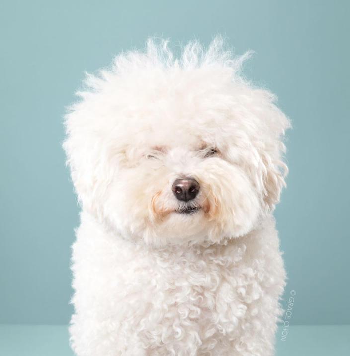7 собак, которым повезло попасть к японскому парикмахеру Полностью преобразились!