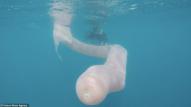 Дайверы нашли под водой странных гигантских ″морских червей″. Вот что это такое Удивительная природа!