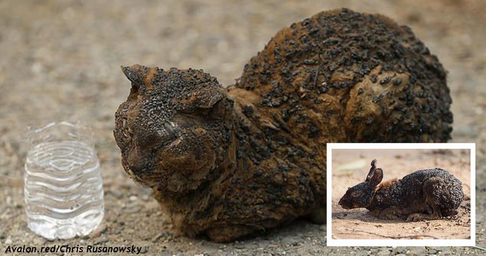 Душераздирающие фото животных, которым удалось выжить во время лесных пожаров в Калифорнии Сердце разрывается от жалости.