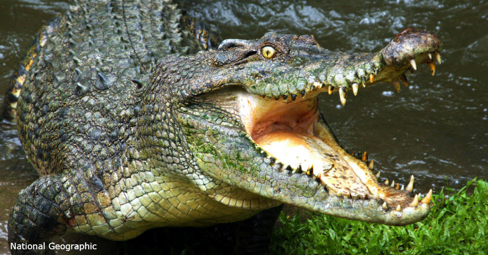 Chanel – первый люксовый бренд, который запретил вещи из крокодила и змей И правильно!
