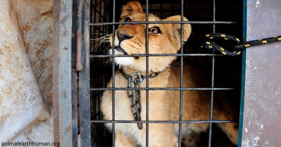 В Украине запретят диких животных в цирках. Потому что они страдают И правильно!