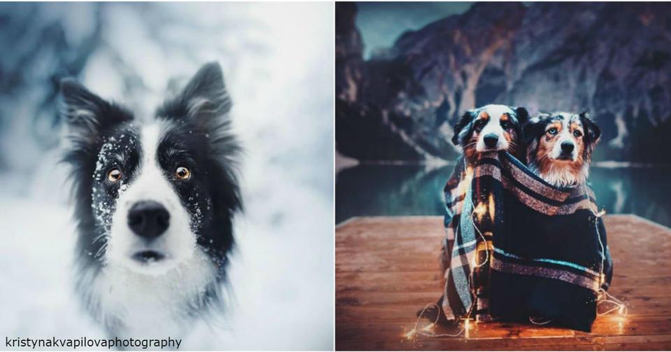 35 самых красивых фото собак, которых я когда либо видела Самые милые хвостатые!