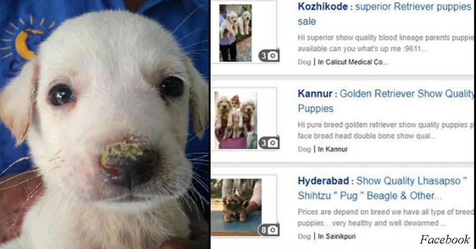 В Фейсбуке больше нельзя продавать щенков или вещи из кожи и меха Лавочку прикрыли.
