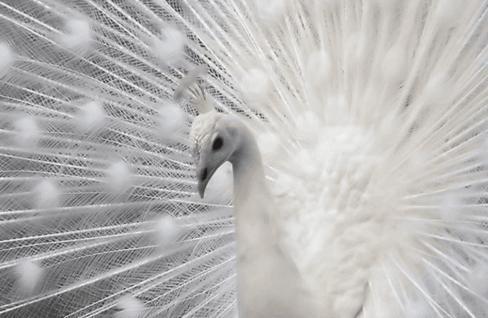 35 редких фото животных-альбиносов, которые выглядят даже милее, чем дети Вау! Удивительно!