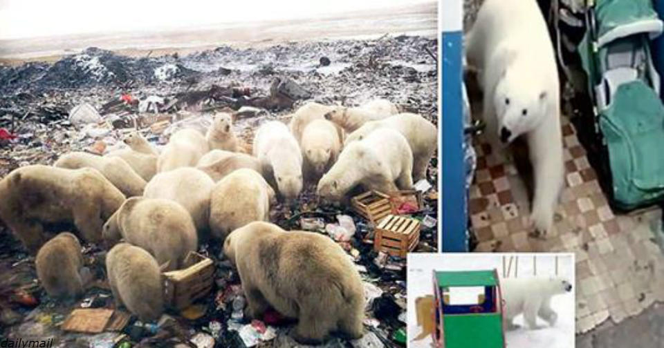 50 белых медведей ворвались в русский город   введен режим ЧП