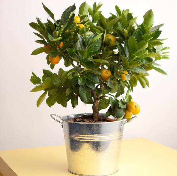 5 самых хорошо пахнущих комнатных растений: чтобы благоухала вся квартира