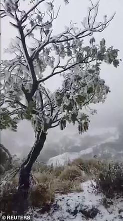 На Гавайских островах выпал снег! Вот фото