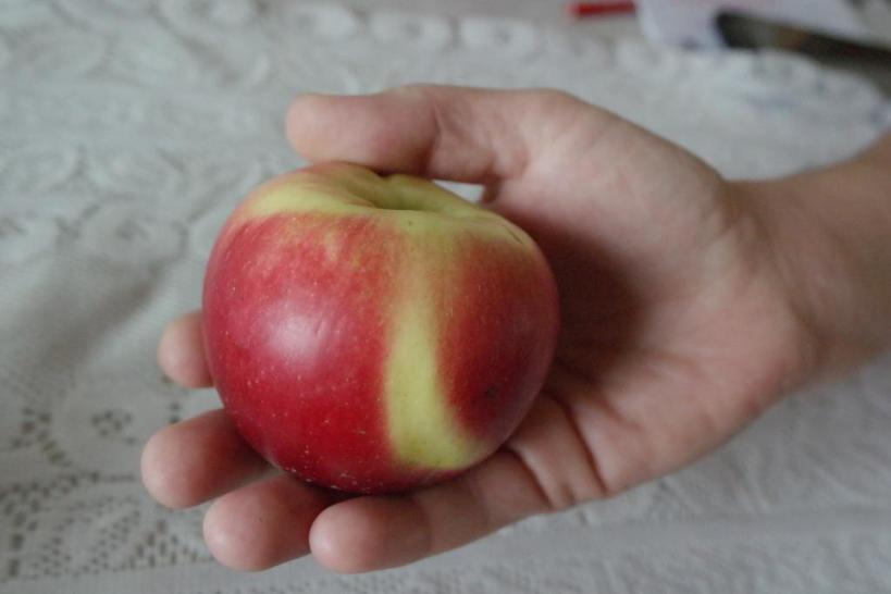 Ответы 19 в яблочко