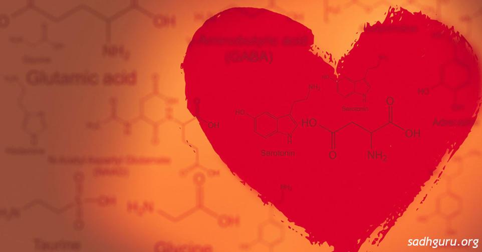 Любви не существует, все дело в ″химии″, а точнее   в нейротрансмиттерах
