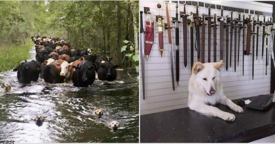 17 трудолюбивых собак, которые просто пытаются зарабатывать на еду