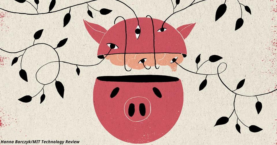 Нейробиологи вернули к жизни клетки «мёртвого» мозга свиньи! Это как вообще?