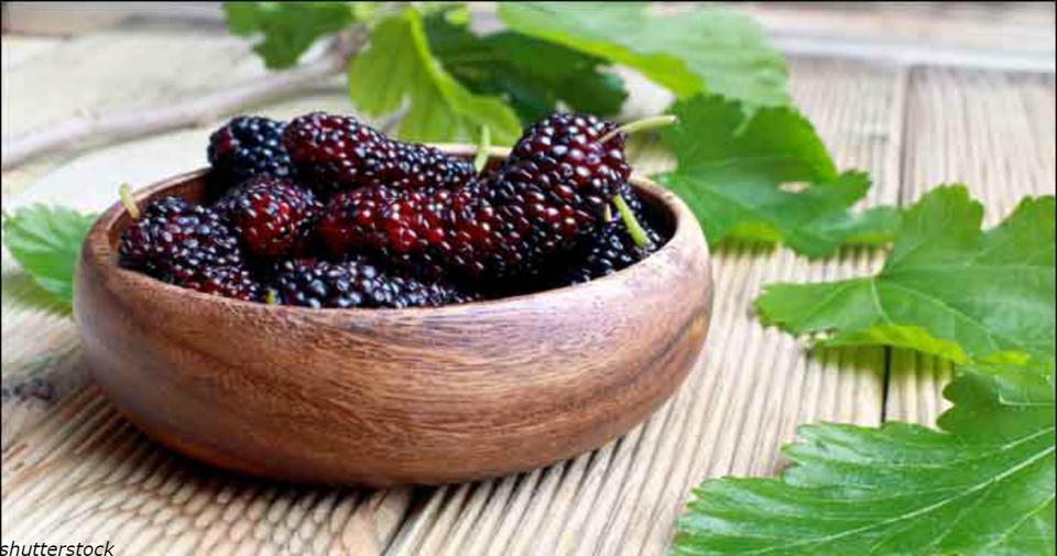 9 причин, почему шелковица   абсолютно уникальная ягода