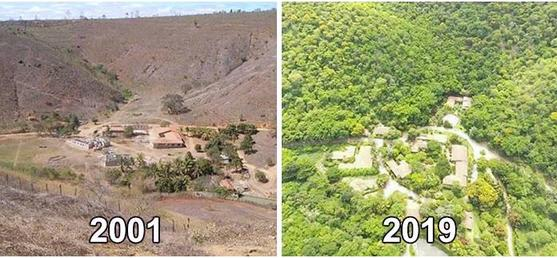 Пара доказала на на своем примере, что лес можно вернуть   за 20 лет