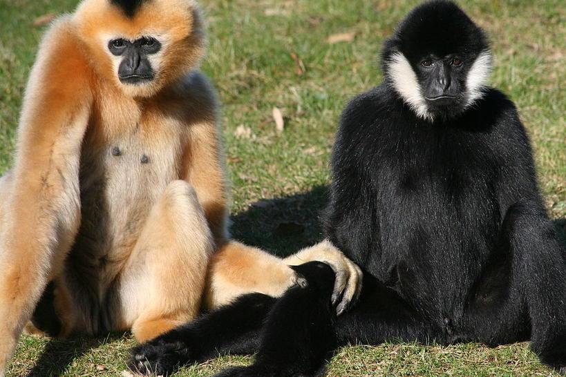 10 видов животных, которые могут исчезнуть уже через несколько лет